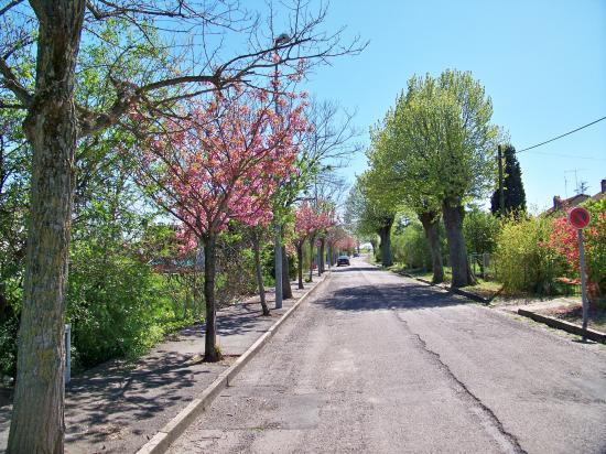 L'avenue en fleurs